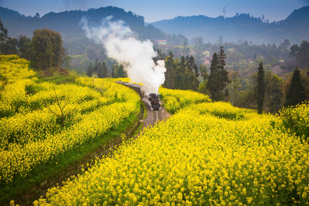 old steam train passing through a sea of rapeseed flowers Stockfoto