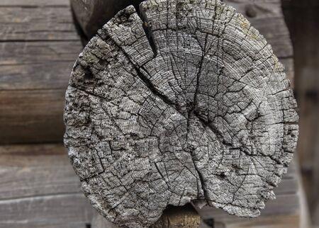 wood cut: cut old wood.