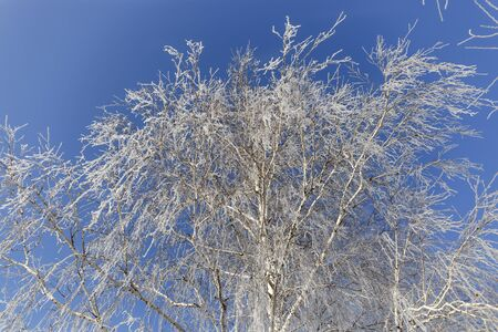 Tree in frost on the background of the sky. 免版税图像