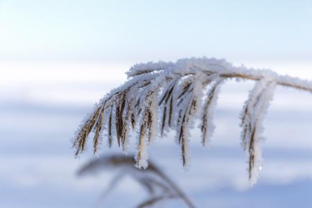 grass frost.
