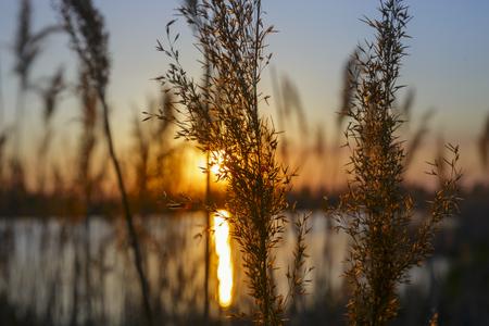 grass sunset ray. 免版税图像
