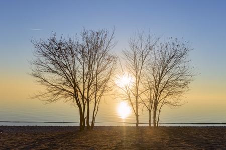 trees on the beach 免版税图像