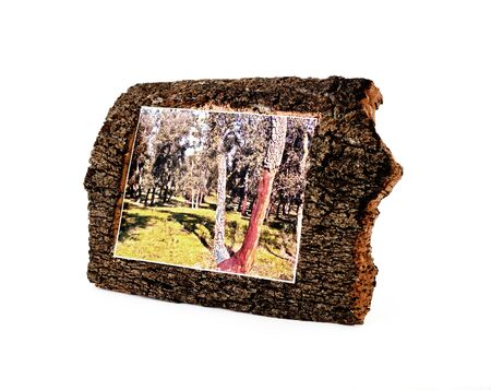 Frame for photos from bark of a pith tree. Stock Photo