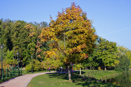 indian summer: Rare trees start turning yellow during Indian summer and an early autumn in park, creating color contrast spots. Stock Photo