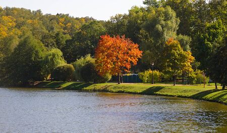 colore: Rare trees start turning yellow during Indian summer and an early autumn in park, creating color contrast spots. Stock Photo