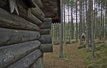 to spit: Here miracles, here the wood goblin wanders. The reserve on Curonian Spit the Kaliningrad region Russia.