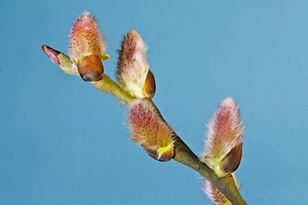 On a branch of a tree the first spring leaflets against the blue sky were dismissed.