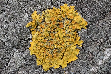 Lichens are organisms-indicators to determine the environmental conditions, particularly air quality. Based on the biology of lichens is the phenomenon of symbiosis - the living together of different organisms (fungi and water blacker).