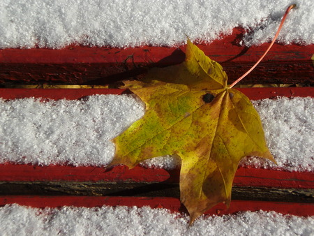 Yellow maple leaf lying on a red bench, sprinkled with snow. Standard-Bild