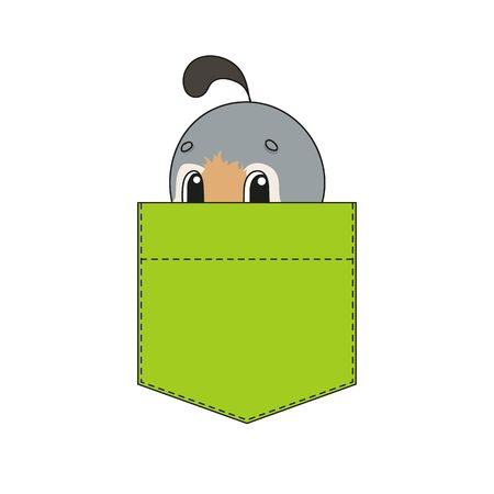 Cute character in shirt pocket. Quail bird. Colorful vector illustration. Cartoon style. Isolated on white background. Design element. Template for your shirts, stickers.