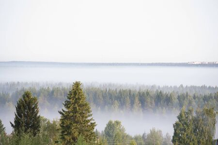 morning mist in a pine forest. mysterious landscape Archivio Fotografico - 133353837