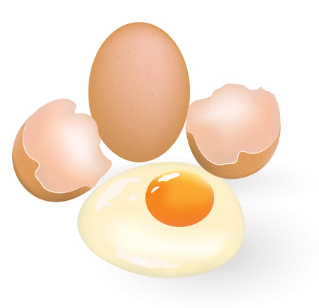 One whole and one cracked egg vector