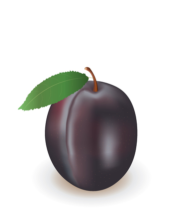 Plum icon vector illustration Stock Illustratie