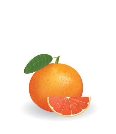 Grapefruit with slice vector illustration isolated on plain background. Çizim