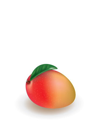 Mango. vector illustration 矢量图像