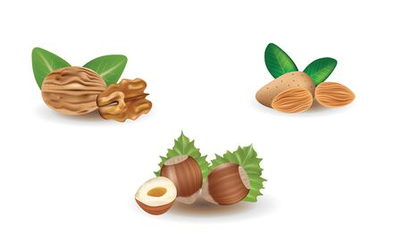 Walnut, hazelnut and almond. vector illustration