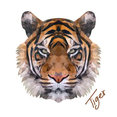 虎の顔の低ポリのベクトルのイラストレーター。