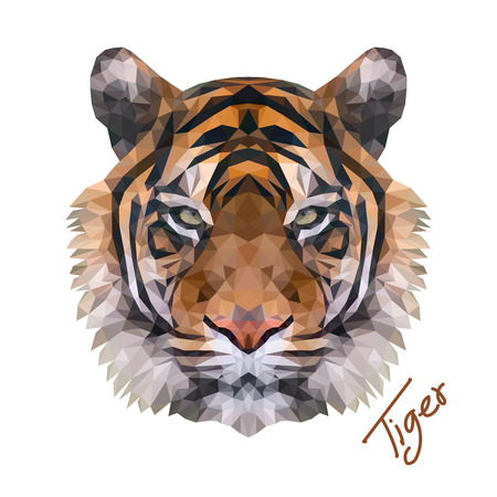 Tigers face low poly vector illustrator.