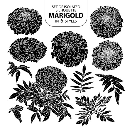 Set of isolated silhouette marigold in 6 styles. Cute hand drawn vector illustration in white outline and black plane on white background.