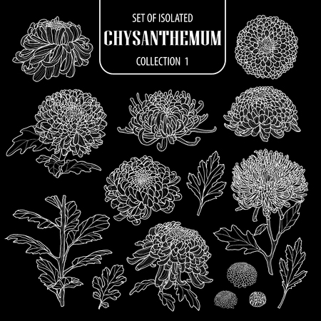 Set of isolated chrysanthemum collection 1. Cute hand drawn flower vector illustration only white outline on black background.