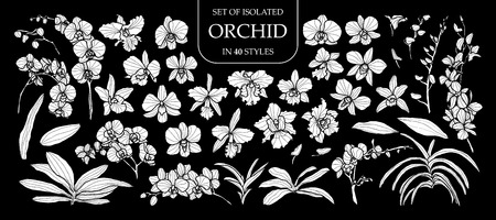 Set of isolated white silhouette orchid in 40 styles .Cute hand drawn flower vector illustration in white plane and no outline on black background.
