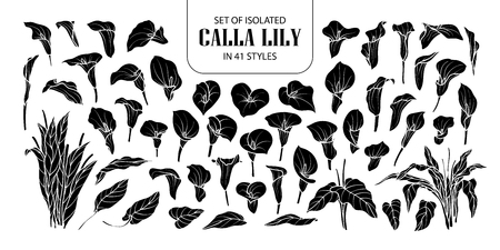 Set of isolated silhouette Calla lily in 41 styles. Cute hand drawn flower vector illustration in white outline and black plane on black background. Illustration