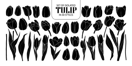 Set of isolated silhouette Tulip in styles. Cute hand drawn flower vector illustration in white outline and black plane on black background.
