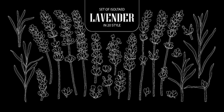 Set of isolated Lavender in 20 styles. Cute hand drawn flower vector illustration only white outline on black background.