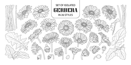 Set of isolated gerbera in different styles. Cute hand drawn flower vector illustration in black outline and white plane on white background.