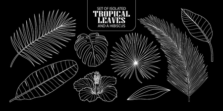 Set of isolated tropical leaves in 8 styles and a hibiscus. Vector illustration of botanical only white outline on black background.