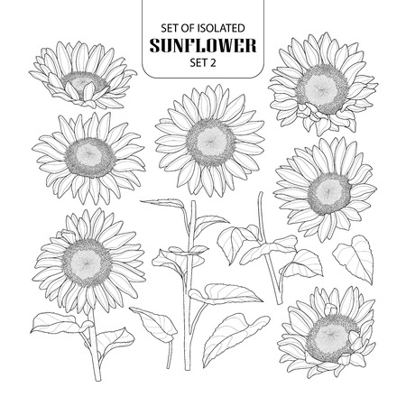 Set of isolated sunflower set 2. Cute hand drawn vector illustration in black outline and white plane on white background. Ilustrace