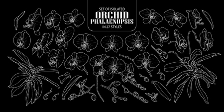 Set of isolated orchid, Phalaenopsis in 27 styles. Cute hand drawn flower vector illustration only white outline on black background.