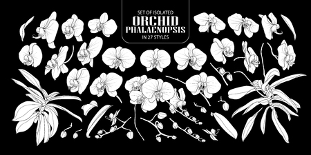 Set of isolated white silhouette orchid, Phalaenopsis in 27 styles. Cute hand drawn flower vector illustration in white plane without outline on black background.
