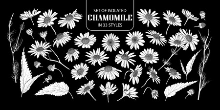 Set of isolated white silhouette chamomile in 33 styles. Cute hand drawn flower vector illustration in white plane without outline on black background.
