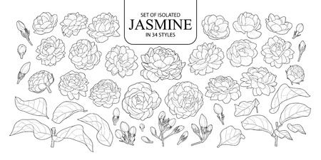 Set of isolated Jasmine in 34 styles. Cute hand drawn flower vector illustration in black outline and white plane on white background.  イラスト・ベクター素材