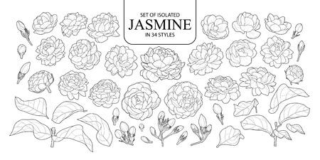 Set von isoliertem Jasmin in 34 Stilen. Niedliche handgezeichnete Blumenvektorillustration im schwarzen Umriss und im weißen Flugzeug auf weißem Hintergrund.