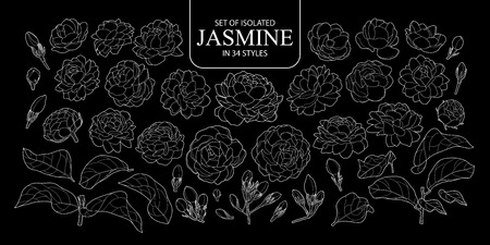Set of isolated outline of Jasmine in 34 styles. Cute hand drawn flower vector illustration only white outline on black background.