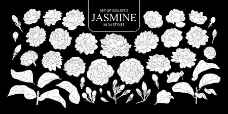 Set of isolated white silhouette Jasmine in 34 styles. Cute hand drawn flower vector illustration in white plane without outline on black background. Illustration