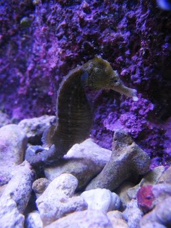 sea horse: Sea horse, Mexico