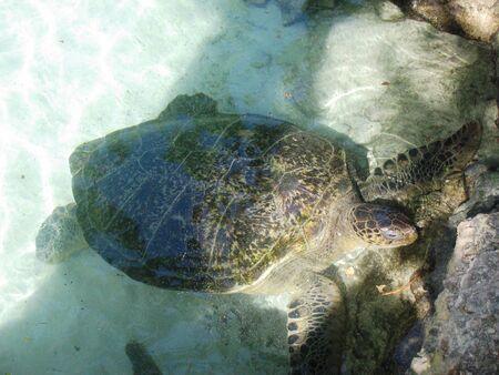 Tortoise, Mexico 版權商用圖片