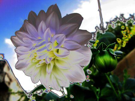 solarized: Solarized flower
