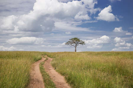 maasai mara: Road going through the Maasai Mara national park (Kenya)