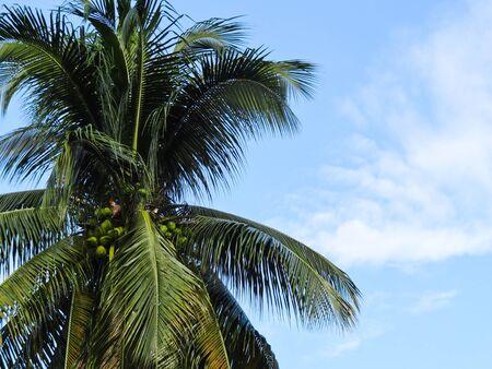 Island palm Stock Photo - 11830031