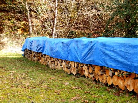 オークと甘い栗の覆われた山の森林清算でログします。 写真素材