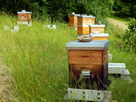 Bee hives in a meadow in the Dordogne, France Reklamní fotografie