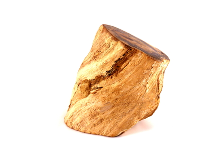 graining: Close up of a piece of petrified wood showing the structure and graining of the wood
