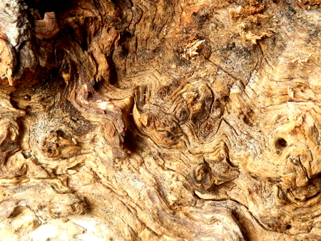 gnarled: Gnarled surface of wood from a dead tree