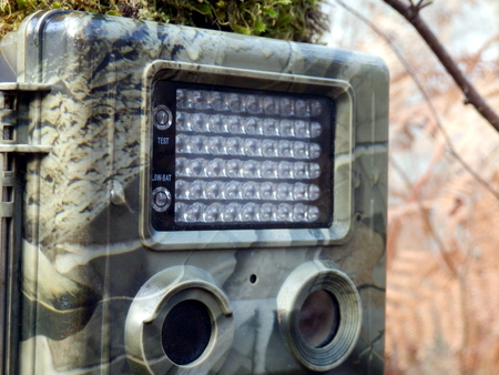 strapped: Camouflaged trail, or wildlife camera strapped to a tree for taking films or pictures of wildlife Stock Photo