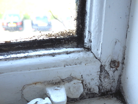 neglected: Neglected window showing signs of rot and mould Stock Photo