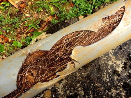 tubo de drenaje fractura causada por la penetración de las raíces del árbol